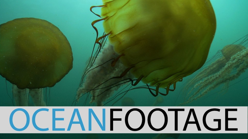 Milbrand Cinema Jellyfish Represented Ocean Footage